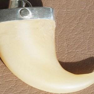 Mountain Lion Claw pendant