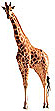 On Safari souvenirs from Africa and Kenya and Botswana and South Africa