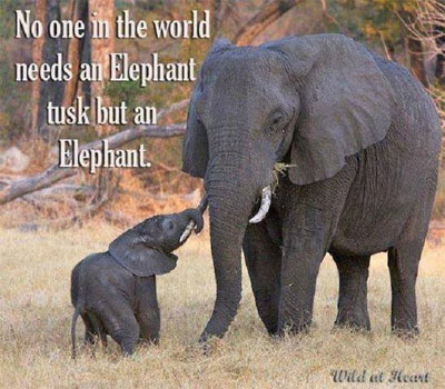 No ivory poaching please